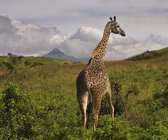 Классическая Танзания