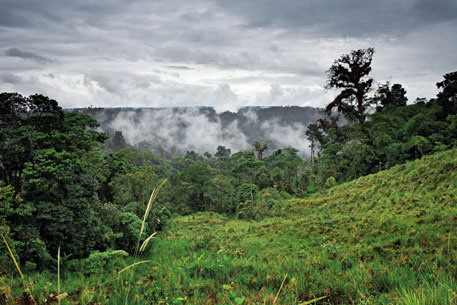 Бразильская амазония