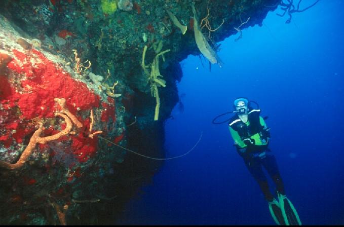 Дайвинг в заливе Кочинос и в подводных пещерах Запатского полуострова